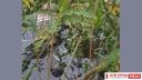 মুন্সিগঞ্জ থেকে নিখোঁজ ইজিবাইক চালকের লাশ ফতুল্লায় উদ্ধার