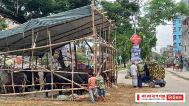 সিদ্ধিরগঞ্জে পাড়া মহল্লায় অবৈধ মিনি পশুর হাট